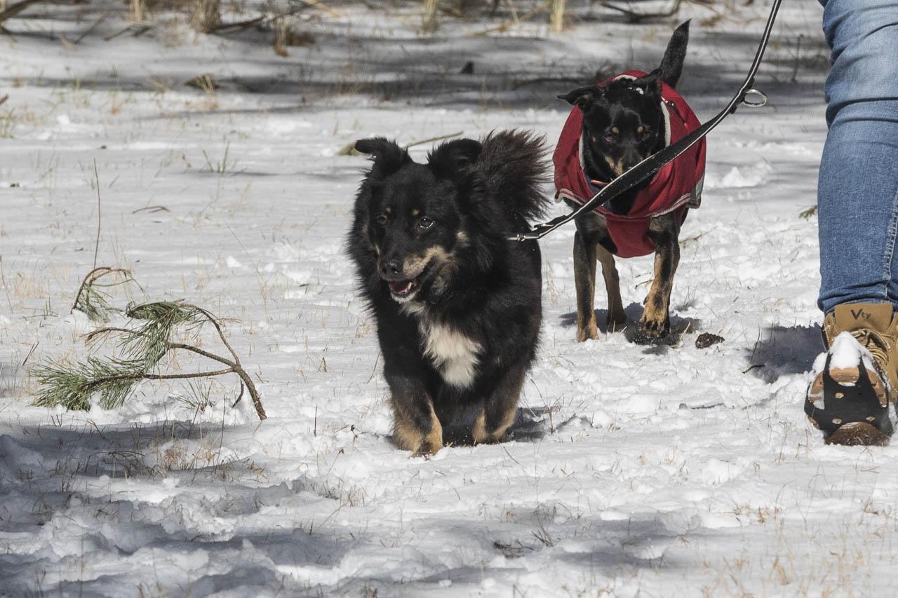 lebhafter hund übernehmen